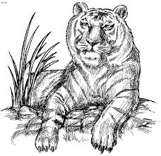 Coloring Page Book Of Tiger