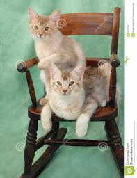 Cats On Rocking Chair Stock Photo. Image Of Feline, Relaxing ...