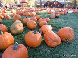 Southern Ohio Pumpkin Patches pumpkin patch 2017 midwestern round up the walking tourists
