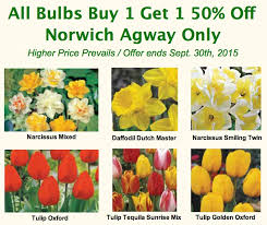 3 easy steps for planting flower bulbs norwich agway
