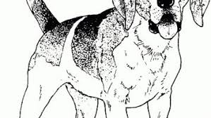 Realistic Beagle Coloring Pages Printable