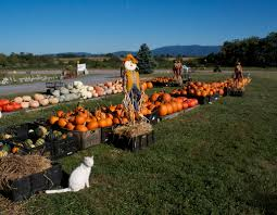 Pumpkin Patch Harrisonburg Va by Stuarts Draft Farm Market Localharvest