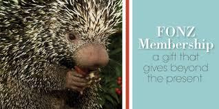 Porcupine Eating A Pumpkin Youtube by Gift Memberships Smithsonian U0027s National Zoo