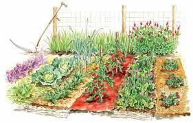 Get the Most From Ve able Garden Mulches Organic Gardening