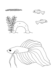 Siamese Fighting Fish Life Cycle Coloring Page