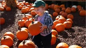 Pumpkin Patch Festival Milwaukee by A Milwaukee Mom U0027s Things To Do With The Kids In Fall