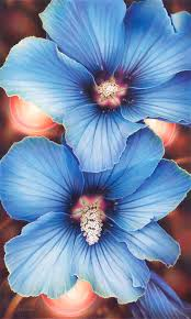 blue hibiscus with lights drawing by s turner