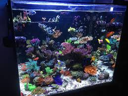 Minimalist Aquascaping | REEF2REEF Saltwater And Reef Aquarium Forum Is This Aquascape Ok Aquarium Advice Forum Community Reefcleaners Rock Aquascaping Contest Live Rocks In Your Saltwater Post Your Modern Aquascape Reef Central Online There A Science To Live Rock Sanctuary 90 Gallon Build Update 9 Youtube Page 3 The Tank Show Skills 16 How Care What Makes Great Large Custom Living Coral Aquariums Nyc