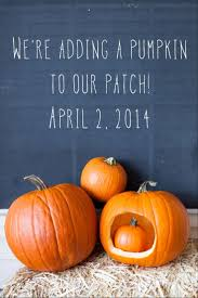 Halloween Express Cedar Rapids by Best 20 Fall Baby Announcement Ideas On Pinterest Fall Gender