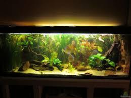 aquarium maxarl 21899 wohnzimmer schauaquarium