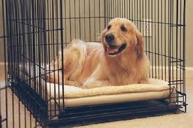 Chew Proof Dog Beds by Indestructible Dog Beds Chewproof Dog Beds For Aggressive Chewers