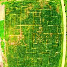 Pumpkin Patches Near Dallas Tx 2015 by Texas A U0026m Built A Massive Corn Maze Here U0027s How The University Did