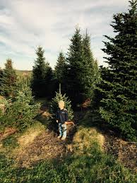 Colorado Springs Christmas Tree Permits by Geissler Tree Farms Inc In Leesport Pa