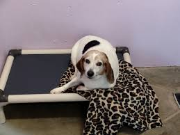 Kuranda Dog Beds by Our Goal Kuranda Beds For Every Dog At Our Shelter Animal