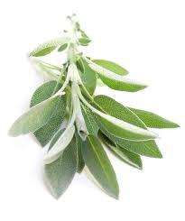 White Sage Uses Natures Garden Fragrance Oils