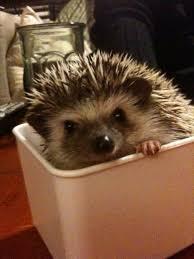 hedgehog cage 50 or less 5 steps