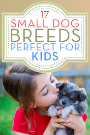 Non Shedding Dog Breeds Small by 17 Small Dog Breeds That Are Good With Kids U2013 Top Dog Tips