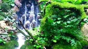Mark Aquascape Waterfalls 2014 - YouTube Aquascape Waterfall Tjupinang Part 2 Youtube Modern Aquarium Design With Style For New Interior Aquascape Low Cost My Waterfall Nhaquascape Pro Pondwater Feature Pumpschester Rockingham Diy Pondless Waterfallsbackyard Landscape Ideasmonmouth Nj Aqualand Nighttime Winter By Inc Photo Projectswarwickorange Countynynorthern Its Called Strenght Of A Thousand Stone Backyard Waterfalllow Maintenance Water Just Add And Patio Amazoncom Kit 3 W Free Led 3light