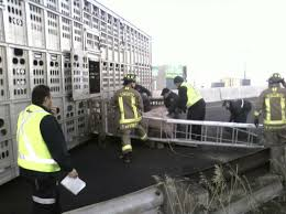 100 Truck Rollover 81 Pigs Die In Highway 427 Rollover The Star
