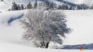 100 Kalavrita Lenochka B Photography Greece Winter 2019