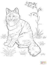 Norwegian Forest Cat Coloring Page