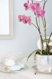 Best Plant For Your Bathroom by Best Plants For Your Bathroom Croydex