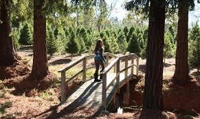 Santa Cruz County Christmas Tree Farms by Holiday Marin Mommies