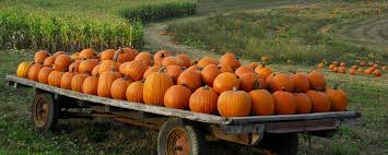 Pumpkin Patch Tampa by Tampa Bay Markets