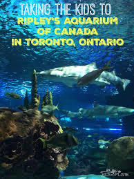 taking the kids to ripley s aquarium of canada in toronto review