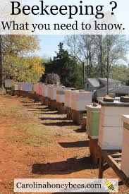 First Steps In Beekeeping - Can You Do It ? | Beekeeping, Farming ... Hive Time Products A Bee Adventure For Everyone Bkeeping Everything You Need To Know Start Your First Best 25 Raising Bees Ideas On Pinterest Honey Bee Keeping The Bees In Your Backyard Guide North Americas Joseph Starting Housing And Feeding Top Bar Beehive Projects Events Level1techs Forums 562 Best Images Knees 320 Like Girl 10 Mistakes New Bkeepers Make Splitting Hives Increase Cookeville Bkeepers Nucleus Colony Or How A 8 Steps With Pictures