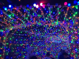 La Zoo Christmas Lights