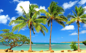 Palm Tree Wallpapers 1920x1200 Paradise Beach Wallpaper