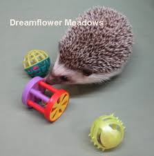 Ceramic Heat Lamp For Hedgehog hedgehog shopping list dreamflower meadows