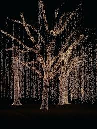 How To Wrap A Tree In Lights Wondrous Trunk On Outdoor Led Blue Fairy Around