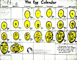 Chicken Math, A Force To Be Reckoned With | Chicken Chick ... Breeding Golden Duckwing Marans Backyard Chickens Best 25 Hatch Eggs Ideas On Pinterest Candling Chicken Easter Egger Or Olive Eggar Hatching Types Of Chickens Backyard Chicken Zone Black Copper Marans Hatching Eggs 12 2017 Groundhog Day Hatchalong The Chick Veterinary Care For A Best Tavuk Biefelder Images 229 9 Euskal Oiloa Marranduna Basque Hen Elite Poultry Truth About Pumpkin Seeds Worms Is My Pullethen Erelcock
