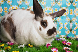 Can Bunny Rabbits Eat Pumpkin Seeds by Rabbit Proof Plants Plants Rabbits Won U0027t Eat