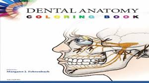 Dental Anatomy Coloring Book Recent Free Download