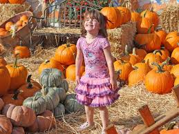 Best Pumpkin Patch Torrance by Pick Great Pumpkins At These Nearby Patches Manhattan Beach Ca