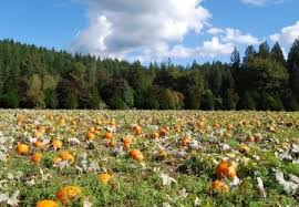 Pumpkin Patch Issaquah by 9 Best Pumpkin Patches To Explore This Fall Seattle Refined