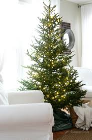 Balsam Christmas Trees Uk by Christmas Dandelion Patina