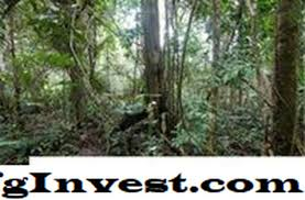 harta intelektual adalah tebal jungle 2021 perancangan