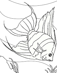 Freshwater Fish Coloring Pages Printable Free