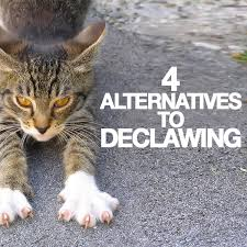 cost to declaw cat 4 alternatives to declawing ms