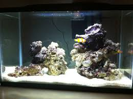 Thoughts/ideas On My Scape - Aquascaping Forum - Nano-Reef.com ... Aquarium Aquascaping Rocks Aquascape Designs Ideas Project Reef Rock 21 Dry Walt Smith Bulk Supply Review Real Generation 4 Digitalreefs News Info How To Live Purple Live Rock Youtube Updated Clear Pics Newbies Attempt At Aquascaping So Far 3reef Design Aquafishvietcom Bring Back The Wall News Builders Keeping Austin Club Walls For A Tank Callorecom River Suggestion Planted Forum