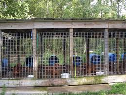 Catchy Collections Of Outside Dog Pen Ideas - Fabulous Homes ... Whosale Custom Logo Large Outdoor Durable Dog Run Kennel Backyard Kennels Suppliers Homestead Supplier Sheds Of Daytona Greenhouses Runs Youtube Amazoncom Lucky Uptown Welded Wire 6hwx4l How High Should My Chicken Run Fence Be Backyard Chickens Ancient Pathways Survival School Llc Diy House Plans Deck Options Refuge Forums Animal Shelters The Barn Raiser In Residential Industrial Fencing Company
