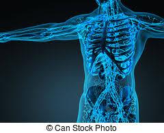 interieur corps humain femme corps femme coffre intérieur organes superimposed dessin
