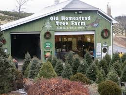 The Christmas Tree Season Is Well Under Way At Old Homestead Farm We Are Open Daily From 930 430 Until December 23rd Choose A Variety Of Fresh