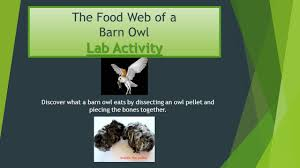 Lab Activity The Food Web Of A Barn Owl Lab Activity Discover What ... Attracting Barn Owls Natural Rodent Control Gardening Energy Transfer And The Carbon Cycle Worksheet Edplace Tritec Science Learning Community Projects Organisms Roles Loss In Food Chain Ecology Biology Lecture Slides Outreach Materials Owl Original Mixed Media Pating 6x8 Inches Bird Wild Decomposers Worksheets For Kids Archbold Biological Station 14 Images Of Wetland Coloring Pages Diagram 037_13d0568f9211773be9a9d4d89c530b2png