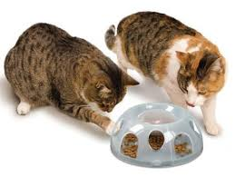 Cats and Puzzle Feeders