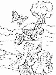 Butterfly On Spring Coloring Page